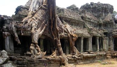 Le temple de Ta Prohm, dans l'ancienne cité d'Angkor au Cambodge.